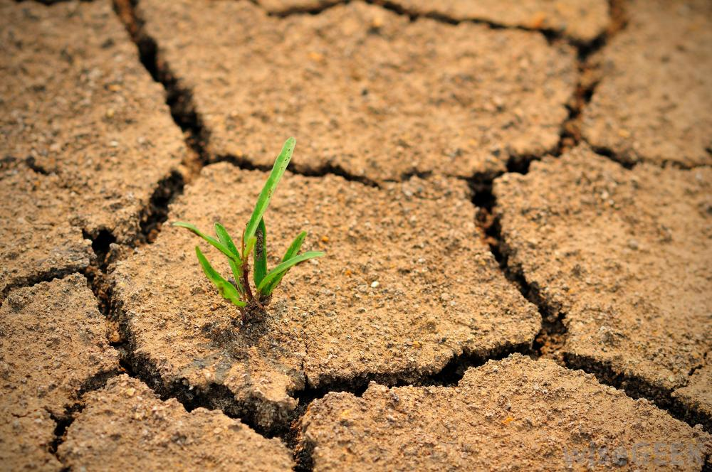 The fight against desertification med o med for Soil environment