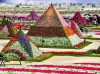 image of Miracle Garden Dubaï