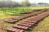 Gardening School Project (Salé)   Photographs